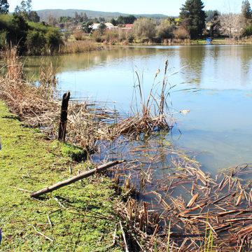 Estudiantes determinan causas de aumento de algas en laguna de Talcamávida
