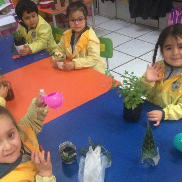 Proyecto Alumni desarrolla huertos saludables en 15 colegios de la intercomuna