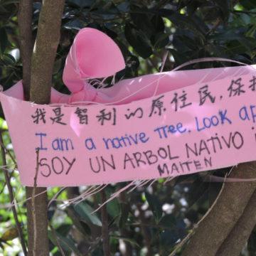 Estudiantes identificaron flora nativa existente en Campus San Andrés