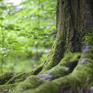 Clase inaugural de Magíster en Medio Ambiente analizó políticas de protección y gestión de áreas protegidas